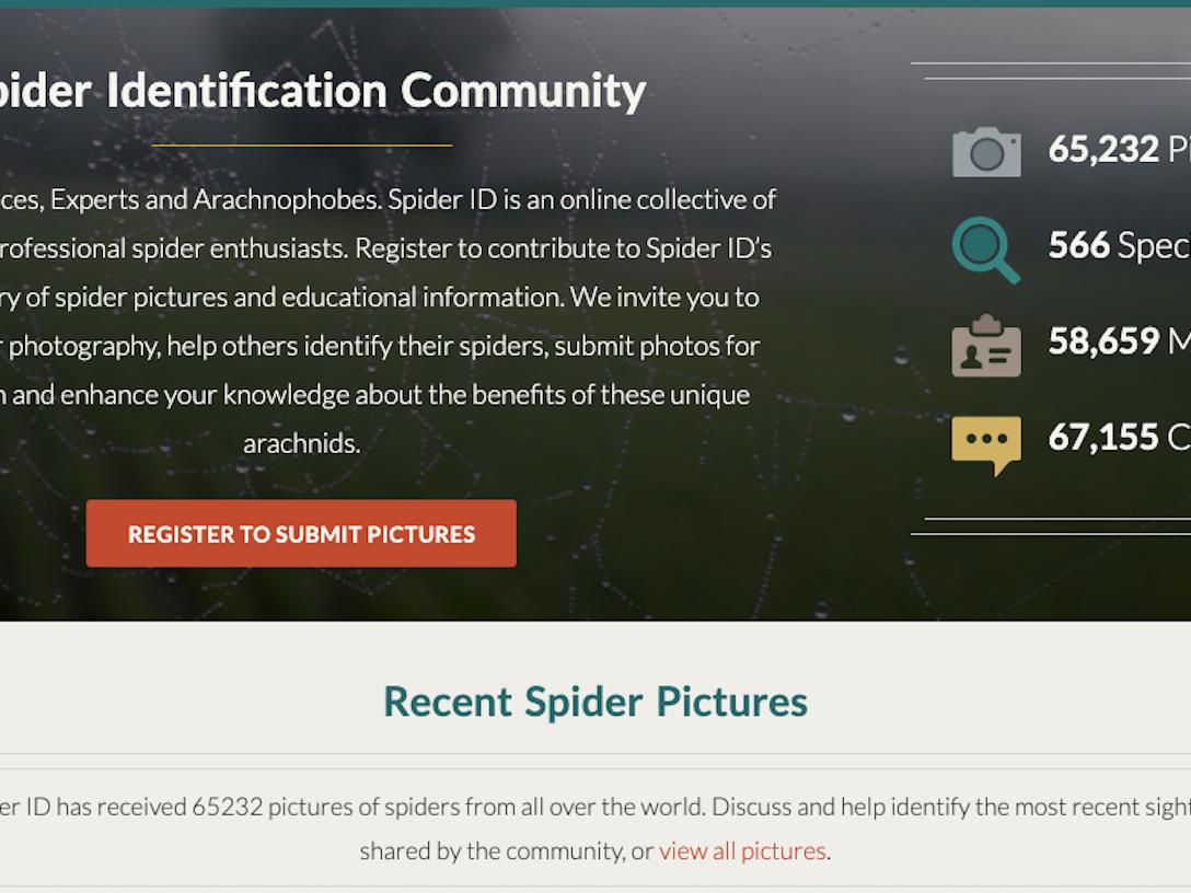 Spider ID